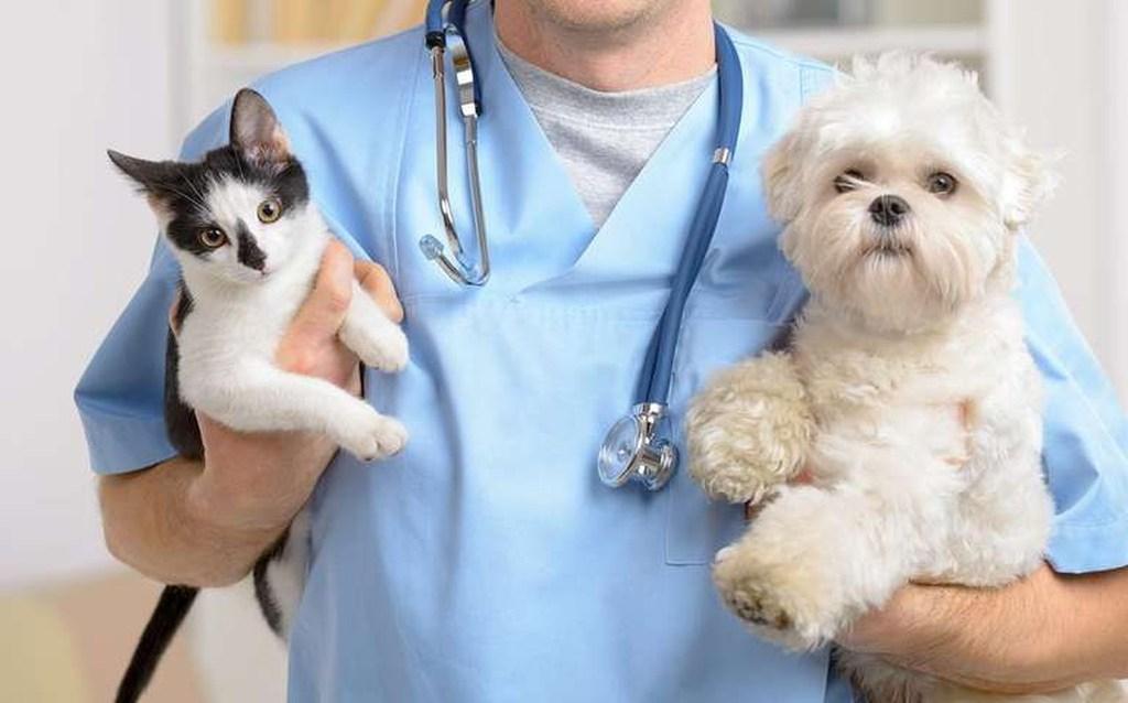 фото: Ветеринарных врачей и клиники лицензируют: адреса и телефоны
